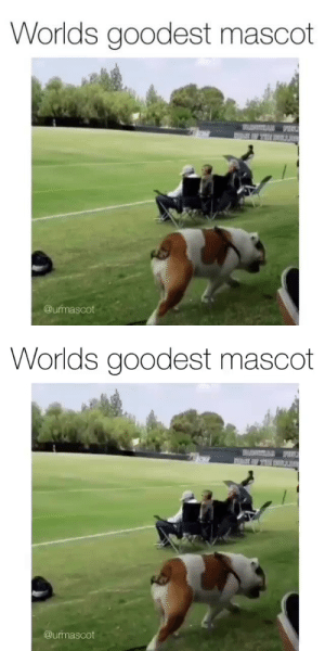 Addie is the mascot we all need right now.Source:@urmascot: Addie is the mascot we all need right now.Source:@urmascot