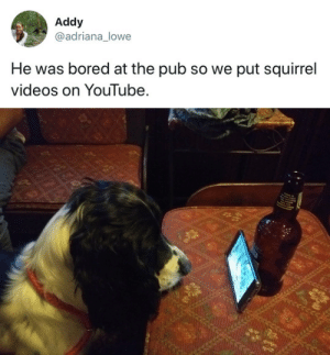 Bored, Target, and Tumblr: Addy  @adriana_lowe  He was bored at the pub so we put squirrel  videos on Youlube. tastefullyoffensive:  (via adriana_lowe)