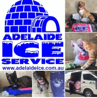 120 bags of ice at the AWL!  Keeping our animals cool is a big job but with big donations of ice like this from our friends at Adelaide Ice, it's a lot easier!  Yesterday we picked up another 120 bags of ice (the third lot for this summer) to distribute to the dogs, cats and rabbits in our care at both the Wingfield and Edinburgh North Shelters as temps soared into the 40's.  As you can see, our animals LOVE keeping cool with iced pools and water bowls, cold towels and even just eating the ice itself!  So THANK YOU Adelaide Ice for your continued support when we need you the most!: ADELAIDE  www.adelaideice.com.au  AHL 120 bags of ice at the AWL!  Keeping our animals cool is a big job but with big donations of ice like this from our friends at Adelaide Ice, it's a lot easier!  Yesterday we picked up another 120 bags of ice (the third lot for this summer) to distribute to the dogs, cats and rabbits in our care at both the Wingfield and Edinburgh North Shelters as temps soared into the 40's.  As you can see, our animals LOVE keeping cool with iced pools and water bowls, cold towels and even just eating the ice itself!  So THANK YOU Adelaide Ice for your continued support when we need you the most!