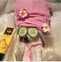 me everyday knowing I nvr broke anyone's heart, made anyone cry themselves to sleep, or 2nd guess their worth bc I'm not a piece of shit. https://t.co/uWTpI1Qfn4: Adler  BANANA  @chihuahua chloel me everyday knowing I nvr broke anyone's heart, made anyone cry themselves to sleep, or 2nd guess their worth bc I'm not a piece of shit. https://t.co/uWTpI1Qfn4