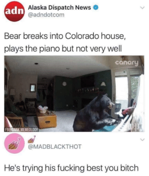 Bitch, Dank, and Fucking: adn  Alaska Dispatch News  @adndotcom  Bear breaks into Colorado house,  plays the piano but not very wel  canary  FB@DANK MEMEOLOGY  @MADBLACKTHOT  He's trying his fucking best you bitch Hes trying his fucking best by blooyoo MORE MEMES