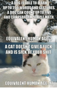 Shit, Fuck, and Dog: ADOGISABLE TO LEARN  , UP TO 250WORBAND GESTURES.  A DOG CAN COUNT UP TO FIVE  AND CAMERFORMSİMPLEMATH.  EQUIVALENT HUMAN AG  A CAT DOESNIT GIVE A FUCK,  AND IS SICKOF YOUR SHIT  EOUIVALENT HUMANAGE:42 dog & cat