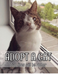 Animals, Cats, and Homeless: ADOPT A CAT  Two lives be richer This is a very important message *Please share, tag and spread the message* 💜 Kitten Season is here! … Although this may sound wonderful to many of you, it's actually a BIG problem for animal shelters! Kitten season is the time of year when cats give birth, flooding animal shelters and rescue groups across the world with homeless litters. Not only does this put extra stress on shelters-rescue groups and their staff-volunteers, it also means that adult cats that are waiting to be adopted usually get overlooked by people who choose to adopt a kitten instead. If you're looking to adopt a furry friend, please visit your local shelter and save a life! Adopt 1 cat = save 2 lives (the one you are adopting and the one who can be saved -and move in at the shelter) 💜 Please Spay-Neuter your cat 💜 Love Monty AdoptDontShop KittenSeason SpayNeuter Share dailykitten ilovemycat cats_of_instagram cats_of_world cats catstagram CatsAreFamily mykidhaspaws meow dodo thedodo boredpanda ellen important cat adopt shelter animals animalshelter love lovecats