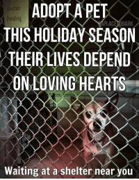 We are busier than normal, this holiday season... So many owner surrenders to our local animal controls, in addition to the strays:( My phone & email has been non stop, the past few weeks. So many of the owner surrenders, are because people are getting new puppies for Christmas. Something I will never understand. But it's not my place to try to figure that out, for it's just a waste of energy that puts my brain into a tailspin. Saving these precious creatures, is what is most important.  The little guy in the photo is a senior, we rescued last week. He has a grade 4 heart murmur & a few other medical issues we are addressing.  He was a very naughty boy at animal control, but has settled in & is a sweetheart❤️ So many chihuahuas every week of the year at animal control. It's heartbreaking. So very important, that if you are getting a dog this holiday season to please research your breeds. Too many chihuahuas turned in, because they are, who they are & can be one people dogs with little quirks & attitudes.  I haven't had my coffee this morning, so please forgive me, if this is repetitive. I'm headed that way now! There will be Lots of posts today! It is the last day of our treat fundraiser, we need to sell lots of treats so our rescues have cookies all year long❤️ Stay tuned!!!  #everylifematters #aplacetobark: ADOPT A PET  THIS HOLIDAY SEASON  THEIRLIVES DEPEND  ON LOVING HEARTS  Rescue  Pending  PLACE OBARK  Waiting at a shelter near you We are busier than normal, this holiday season... So many owner surrenders to our local animal controls, in addition to the strays:( My phone & email has been non stop, the past few weeks. So many of the owner surrenders, are because people are getting new puppies for Christmas. Something I will never understand. But it's not my place to try to figure that out, for it's just a waste of energy that puts my brain into a tailspin. Saving these precious creatures, is what is most important.  The little guy in the photo is a senior, we r