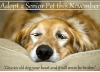 """Adopt a Senior Pet this November  """"Give an old dog your heart and it will never be broken Give an old dog your heart and it will never be broken Adopt a senior pet this November     #adoptasenior  #pet #dog"""