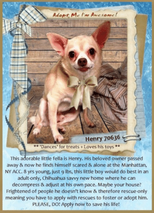 """**FOSTER or ADOPTER NEEDED ASAP** ** 'Dances' for treats + Loves his toys ** This adorable little fella is Henry. His beloved owner passed away & now he finds himself scared & alone at the Manhattan, NY ACC. 8 yrs young, just 9 lbs, this little boy would do best in an adult-only, Chihuahua savvy new home where he can decompress & adjust at his own pace. Maybe your house? Frightened of people he doesn't know & therefore rescue-only meaning you have to apply with rescues to foster or adopt him. PLEASE, DO! Apply now to save his life!   For a New Family to Know: """"Henry goes on wee wee pads in the home, previously did not go on many walks. Lots of energy in the morning when he is waiting for his breakfast. Does """"twirlies"""" in the morning when he was with the owner's sister. Loves his toys. """"  ✔Pledge✔Tag✔Share✔FOSTER✔ADOPT✔Save his life!  ******************************************** *** TO FOSTER OR ADOPT ***   To FOSTER or ADOPT, To SAVE his LIFE, SPEAK UP NOW & apply with rescues OR message Must Love Dogs - Saving NYC Dogs OR email MustLoveDogsNYC@gmail.com IMMEDIATELY!!!! HURRY, he IS OUT OF TIME! :(  The general rule is to foster you have to be within 4 hours of the NYC ACC approved New Hope partner rescues you are applying with and to adopt you will have to be in the general NE US area; NY, NJ, CT, PA, DC, MD, DE, NH, RI, MA, VT & ME (some rescues will transport to VA).  ===========================  Henry 70636 Small Mixed Breed Sex male Age 8 yrs (approx.) 9 lbs  My health has been checked.  My vaccinations are up to date. My worming is up to date.  I have been micro-chipped.   I am waiting for you at the Manhattan, NY ACC.  Please, Please, Please, save me!  For a New Family to Know: """"He goes on wee wee pads in the home, previously did not go on many walks. Lots of energy in the morning when he is waiting for his breakfast. Does """"twirlies"""" in the morning when he was with the owner's sister. Loves his toys. """"  Previously lived with: Adults Behavior toward strangers:"""