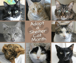 Cats, Family, and Kitties: Adopt  Shelter  Cat  Month Did you know that June is National Adopt a Shelter Cat Month? If you've been thinking of adding a new furry family member, now is the purr-fect time! In fact, some of the kitties here may have told us that they would really like to spend this summer taking long cat-naps with their new family. Visit Tails Humane Society to meet some of our adoptable cats or view them online at www.TailsHumaneSociety.org/adopt today!