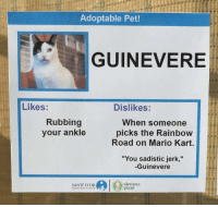 "Mario Kart, Mario, and Rainbow: Adoptable Pet!  GUINEVERE  Likes:  Dislikes:  Rubbing  your ankle  When someone  picks the Rainbow  Road on Mario Kart.  ""You sadistic jerk,""  -Guinevere  SANTÉ D'OR  obvious  plant  ADOPTION CENTEK <p>Possible format? (template in comments) via /r/MemeEconomy <a href=""https://ift.tt/2EvuPVp"">https://ift.tt/2EvuPVp</a></p>"