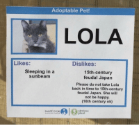 Meirl: Adoptable Pet!  LOLA  Likes:  Dislikes:  Sleeping in a  sunbeam  15th-century  feudal Japan  Please do not take Lola  back in time to 15th-century  feudal Japan. She will  not be happy.  (16th century ok)  obviousS  plant  SANTÉ D'OR Meirl