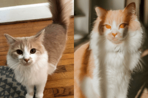 Adopted Elliott back in Oct 2019. Found him being rehomed for free through FB. Left is the only pic I saw of him before he was brought to my home. Right is the most recent picture I took of him.: Adopted Elliott back in Oct 2019. Found him being rehomed for free through FB. Left is the only pic I saw of him before he was brought to my home. Right is the most recent picture I took of him.