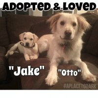 "My heart always smiles, when our dogs find Loving Homes💕 Even better is a repeat adopter a year later! ""Otto"" has a little brother now, named ""Jake"" and truly the best puppy parents who will adore & care for them, for life. These are the things that keep me going... (Special Thank You to Brenda for fostering ""Jake's"" mom & other siblings)  It has been a very difficult two weeks, which I will write about soon.  It just takes me a bit, when things get too tough emotionally, to write about. Many times I just don't have the luxury of being able to get emotional, for I have to keep going, because there are more homeless animals, in need, every single day of the year.  Then pile on the stories of the animals from cruelty cases, an abandonment case by owner, who left a dog on the side of the road in his wire crate & a mother dog, who has been left behind, because she had heart worm and is a bully breed, but the rescue took her pups, who were barely weaned:( Sometimes it's just best I go quiet online, as to say nothing that would not be of a positive nature.  So I focus on this... The Adoptions The Loving Homes & The Lives Saved💕  #evertlifematters #aplacetobark #adoptrescuedpets: ADOPTeD & Love D  ""Jake  ""Otto  APLACETOBARK My heart always smiles, when our dogs find Loving Homes💕 Even better is a repeat adopter a year later! ""Otto"" has a little brother now, named ""Jake"" and truly the best puppy parents who will adore & care for them, for life. These are the things that keep me going... (Special Thank You to Brenda for fostering ""Jake's"" mom & other siblings)  It has been a very difficult two weeks, which I will write about soon.  It just takes me a bit, when things get too tough emotionally, to write about. Many times I just don't have the luxury of being able to get emotional, for I have to keep going, because there are more homeless animals, in need, every single day of the year.  Then pile on the stories of the animals from cruelty cases, an abandonment case by owner, who left a dog on the side of the road in his wire crate & a mother dog, who has been left behind, because she had heart worm and is a bully breed, but the rescue took her pups, who were barely weaned:( Sometimes it's just best I go quiet online, as to say nothing that would not be of a positive nature.  So I focus on this... The Adoptions The Loving Homes & The Lives Saved💕  #evertlifematters #aplacetobark #adoptrescuedpets"