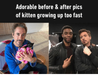 Dank, Growing Up, and Black: Adorable before & after pics  of  kitten growing up too fast  ED WE ELLL A black panther is the melanistic color variant of any big cat species.