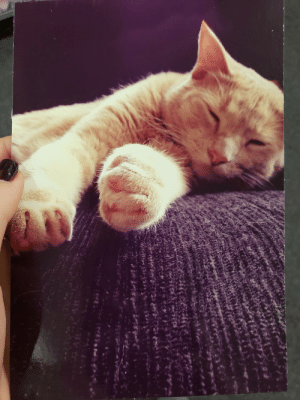 Drug, Adorable, and Store: Adorable card i found at a drug store