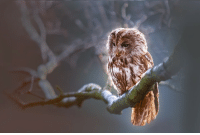 Adorable, lazy Owl, I don't if he is upset or just relaxing with that sad look.: Adorable, lazy Owl, I don't if he is upset or just relaxing with that sad look.