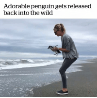 Penguin, Wild, and Adorable: Adorable penguin gets released  back into the wild This is so sweet! 🐧  Credit: Kaikōura Wildlife Rescue