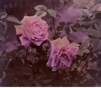 Tumblr, Blog, and Blogspot: adrowningwoman:Autochrome by Charles Zoller