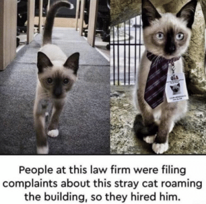 https://t.co/aJ4VGlEMTU: ADVA  People at this law firm were filing  complaints about this stray cat roaming  the building, so they hired him. https://t.co/aJ4VGlEMTU