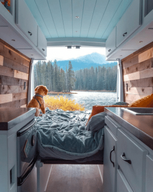 Adventure is out there. Be the pup to seize the day.: Adventure is out there. Be the pup to seize the day.