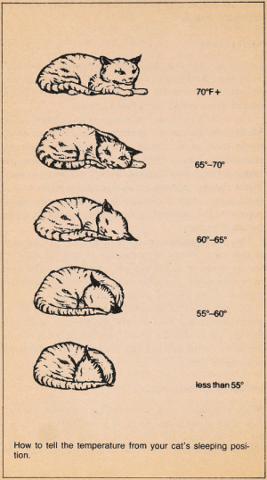 "adventuremidget42:  little-dove:  allcatsconstitutethesamefamily: ""How to tell the temperature from your cat's sleeping position.""  From Your Incredible Cat: Understanding the Secret Powers of Your Pet by David Greene.    @notsexualaboutit   cats can tell you everything you could ever need to know : adventuremidget42:  little-dove:  allcatsconstitutethesamefamily: ""How to tell the temperature from your cat's sleeping position.""  From Your Incredible Cat: Understanding the Secret Powers of Your Pet by David Greene.    @notsexualaboutit   cats can tell you everything you could ever need to know"