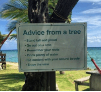 https://t.co/HRvf7m0hzK: Advice from a tree  e Stand tall and proud  e Go out on a limb  . Remember your roots  . Drink plenty of water  Be content with your natural beauty  Enjoy the view https://t.co/HRvf7m0hzK