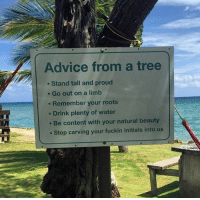 some helpful advice from a tree: Advice from a tree  . Stand tall and proud  . Go out on a limb  . Remember your roots  e Drink plenty of water  Be content with your natural beauty  Stop carving your fuckin initials into us some helpful advice from a tree