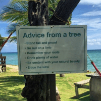 Advice, The View, and Tree: Advice from a tree  Stand tall and proud  e Go out on a limb  . Remember your roots  Drink plenty of water  . Be content with your natural beauty  . Enjoy the view <p>Advice from a tree</p>