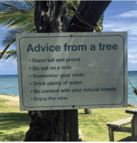 """Advice, The View, and Tree: Advice from a tree  Stand tall and proud  . Go out on a limb  . Remember your roots  Drink plenty of water  Be content with your natural beauty  Enjoy the view <p>Thanks tree via /r/wholesomememes <a href=""""https://ift.tt/2ujuKEw"""">https://ift.tt/2ujuKEw</a></p>"""