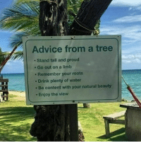 @Regrann from @successambassador - Advice from a tree 🌳🌲🌴👊 What are your thoughts on this? Follow @SuccessAmbassador for more. mondaymotivation regrann: Advice from a tree  Stand tall and proud  Go out on a limb  Remember your roots  Drink plenty of water  Be content with your natural beauty  Enjoy the view @Regrann from @successambassador - Advice from a tree 🌳🌲🌴👊 What are your thoughts on this? Follow @SuccessAmbassador for more. mondaymotivation regrann