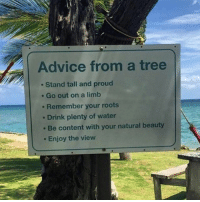 Thx tree.: Advice from a tree  Stand tall and proud  Go out on a limb  Remember your roots  Drink plenty of water  Be content with your natural beauty  Enjoy the view Thx tree.