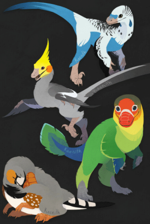 kaenith:  More domestic dino-birds!  From top to bottom: a blue parakeet, a grey cockatiel, a Fischer's lovebird, and a zebra finch.(Disclaimer: I tried to do my research, but I'm no paleontologist - no doubt I messed up the anatomy in multiple places.)These are available as stickers, tote bags, t-shirts, and such on Redbubble and TeePublic!: ae  Kaenith kaenith:  More domestic dino-birds!  From top to bottom: a blue parakeet, a grey cockatiel, a Fischer's lovebird, and a zebra finch.(Disclaimer: I tried to do my research, but I'm no paleontologist - no doubt I messed up the anatomy in multiple places.)These are available as stickers, tote bags, t-shirts, and such on Redbubble and TeePublic!