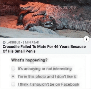 Dank, Facebook, and Memes: aefiessions  LADBIBLE 3 MIN READ  Crocodile Failed To Mate For 46 Years Because  Of His Small Penis  What's happening?  It's annoying or not interesting  .I'm in this photo and I don't like it  l think it shouldn't be on Facebook meirl by HiddenAgenta MORE MEMES