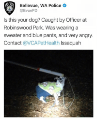 free my mans he aint do nun: aELLEVUE  Bellevue, WA Police  (a BVuePD  Is this your dog? Caught by Officer at  Robinswood Park. Was wearing a  sweater and blue pants, and very angry  Contact  avCAPetHealth Issaquah free my mans he aint do nun