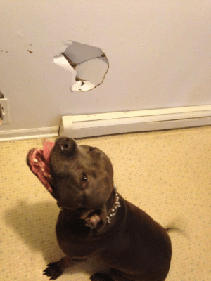 Step Brothers, Tumblr, and Blog: aeon-fux:  firedanceryote:  kinkyeviscerator:  cosplaymutt:  So my step brothers dog came down the stairs too fast and ran into the wall because he was excited….   WHAT A PERFECT BABY  To be fair I've done this too  he did nothing wrong