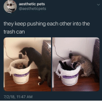 Memes, Trash, and Aesthetic: aesthetic pets  @aestheticpets  they keep pushing each other into the  trash can  7/2/18, 11:47 AM Do not , I repeat DO NOT follow @fuckboyproblem.s if you get easily offended 🤬🤯