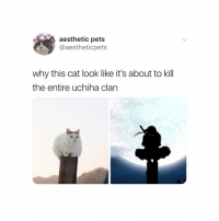 Naruto, Aesthetic, and Pets: aesthetic pets  @aestheticpets  why this cat look like it's about to kill  the entire uchiha clan 🐈
