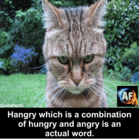 hangry: AF  mafacts  Hangry which is a combination  of hungry and angry is an  actual word