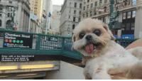 hermionejg:  marniethedog:  took the train 2day   I don't know what I even just watched but it really prepared me for the day.  always: AFAYETE ST  DUANE ST  09000 hermionejg:  marniethedog:  took the train 2day   I don't know what I even just watched but it really prepared me for the day.  always