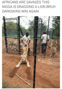 LMAO DARKSKINS WIN AGAIN: AFRICANS ARE SAVAGES THIS  NIGGA IS DRAGGING A LION BRUH  DARK SKINS WIN AGAIN LMAO DARKSKINS WIN AGAIN