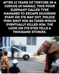 Memes, Police, and Smh: AFTER 12 YEARS OF TORTURE IN A  CIRCUS IN HAWAII, THIS POOR  ELEPHANT CALLED TYKE  MANAGED TO ESCAPE INJURING  STAFF ON ITS WAY OUT, POLICE  THEN SHOT HIM 86 TIMES WHICH  EVENTUALLY KILLED HIM. THE  LOOK ON ITS EYES TELLS A  THOUSAND STORIES Smh😡