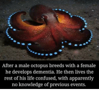 Apparently, Confused, and Life: After a male octopus breeds with a female  he develops dementia. He then lives the  rest of his life confused, with apparently  no knowledge of previous events. meirl
