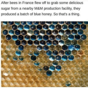 Club, Tumblr, and Blog: After bees in France flew off to grab some delicious  sugar from a nearby M&M production facility, they  produced a batch of blue honey. So thats a thing laughoutloud-club:  How cool is MM honey?