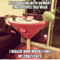 Memes, Captioned, and 🤖: AFTER  DEALING WITH SOIMANY  CRANPEOPLE THISWEEK  I REALIZE HOW MUCH ILOVE  MY CRAZY CATS  Caption by Kittyworks Make it a double!