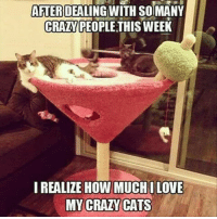 Memes, 🤖, and Crazy Cat: AFTER  DEALING WITH SOIMANY  CRAZY PEOPLE THIS WEEK  I REALIZE HOW MUCHILOVE  MY CRAZY CATS