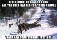 Hunting: AFTER HUNTING SEASON ENDS  ALL THE DEER GATHER FORTHEIR ANNUAL  HAHAHA YOU MISSED ME FESTIVAL