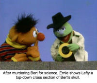 He always suspected that Bert was thick-skulled and brainless.: After murdering Bert for science, Ernie shows Lefty a  top-down cross section of Bert's skull. He always suspected that Bert was thick-skulled and brainless.