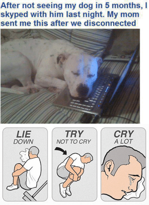 big oof: After not seeing my dog in 5 months, I  skyped with him last night. My mom  sent me this after we disconnected  CRY  A LOT  TRY  LIE  DOWN  NOT TO CRY big oof