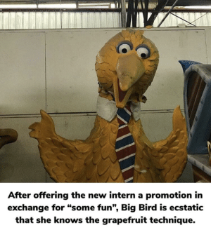 """Keep it quite Big Bird, don't want to end up like Bill.: After offering the new intern a promotion in  exchange for """"some fun"""", Big Bird is ecstatic  that she knows the grapefruit technique. Keep it quite Big Bird, don't want to end up like Bill."""