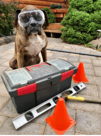 Memes, Control, and Work: After viewing some fixer upper shows, Hooch offered to help with a little demo work.   He had the tool box, safety glasses, orange cones and was ready to get things rolling.    He was quickly  told no thank you and the professionals had it under control.   Bummed, he whipped his glasses to the ground and trotted inside.    After watching the workers build a sweat, he decided maybe it was wise he stepped back.  Even though he was labeled a working dog, he really didn't want to do a job.  Happy Tuesday Everyone!