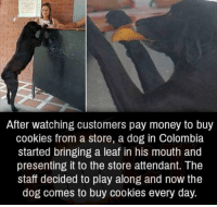Cookies, Money, and Colombia: After watching customers pay money to buy  cookies from a store, a dog in Colombia  started bringing a leaf in his mouth and  presenting it to the store attendant. The  staff decided to play along and now the  dog comes to buy cookies every day. The goodest of boys