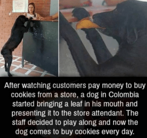 "Cookies, Memes, and Money: After watching customers pay money to buy  cookies from a store, a dog in Colombia  started bringing a leaf in his mouth and  presenting it to the store attendant. The  staff decided to play along and now the  dog comes to buy cookies every day. lastsonlost:  positive-memes:  This is just awesome  ""Capitalism. So easy a dog can learn it"".."
